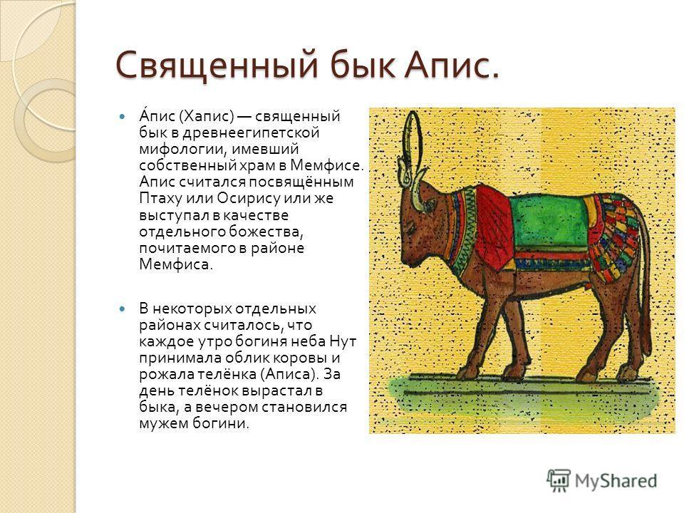 Священный бык Апис. Апис ( Хапис ) священный бык в древнеегипетской мифологии, имевший собственный храм в Мемфисе. Апис считался посвящённым Птаху или Осирису или же выступал в качестве отдельного божества, почитаемого в районе Мемфиса. В некоторых о