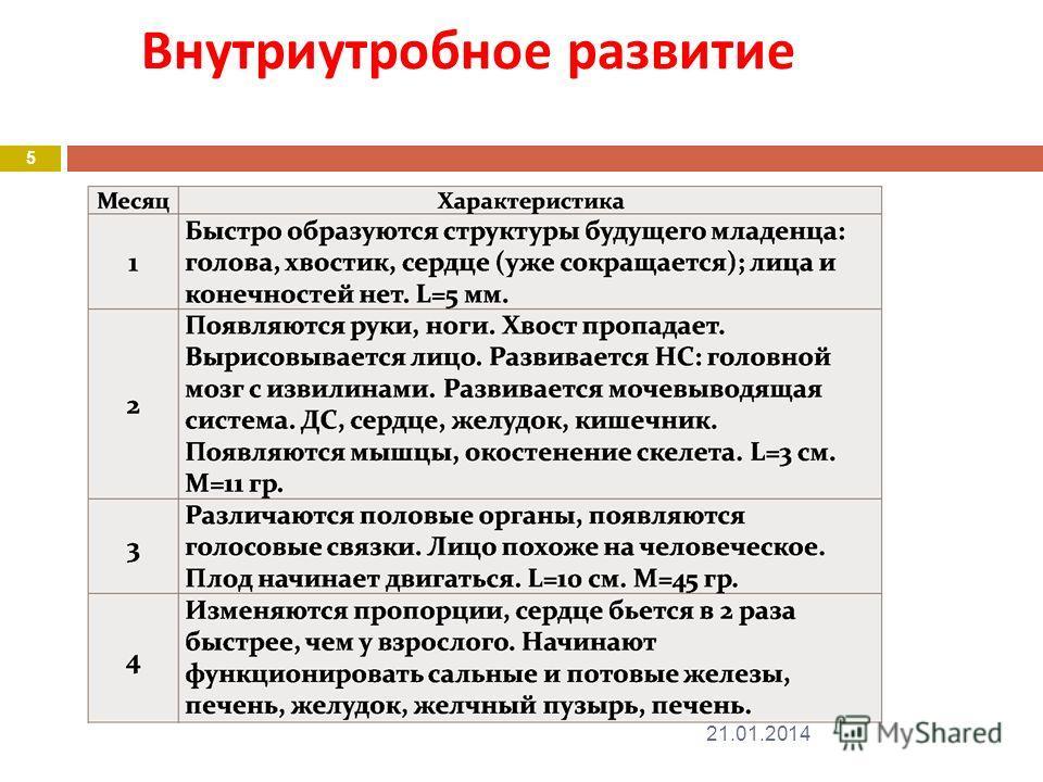 Внутриутробное развитие 21.01.2014 5