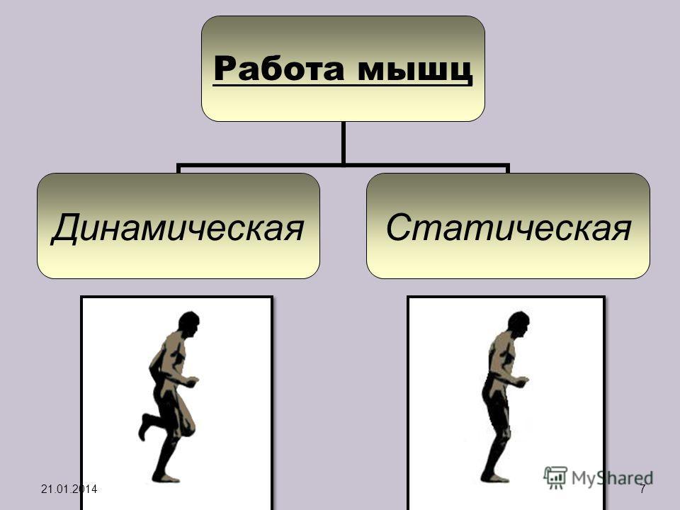 Работа мышц ДинамическаяСтатическая 21.01.20147