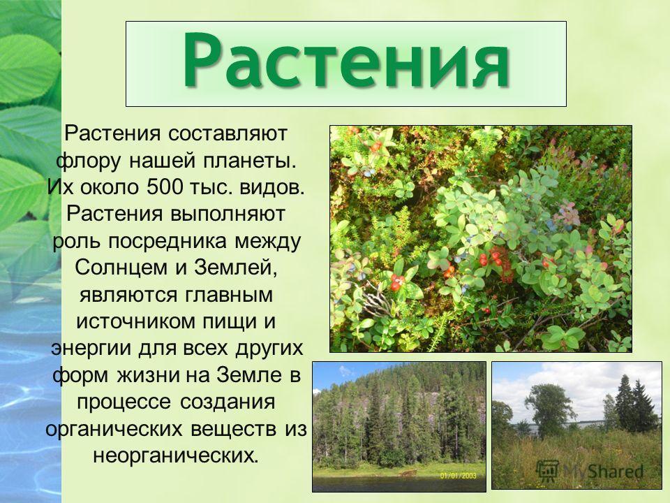 Растения Растения составляют флору нашей планеты. Их около 500 тыс. видов. Растения выполняют роль посредника между Солнцем и Землей, являются главным источником пищи и энергии для всех других форм жизни на Земле в процессе создания органических веще