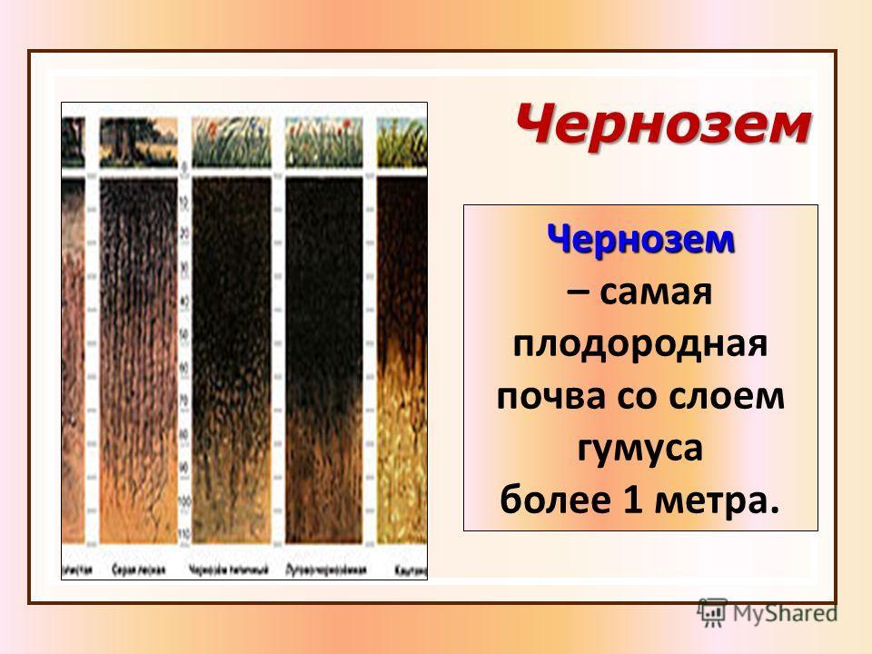 Чернозем Чернозем – самая плодородная почва со слоем гумуса более 1 метра.