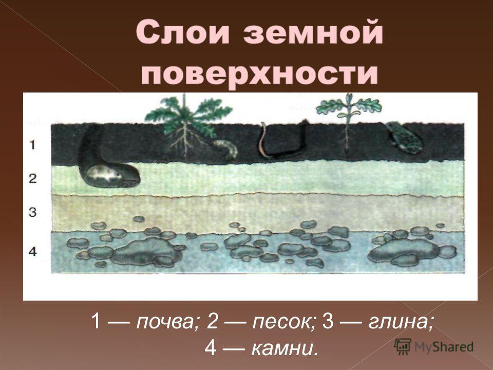 1 почва; 2 песок; 3 глина; 4 камни.