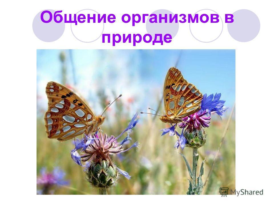 Общение организмов в природе