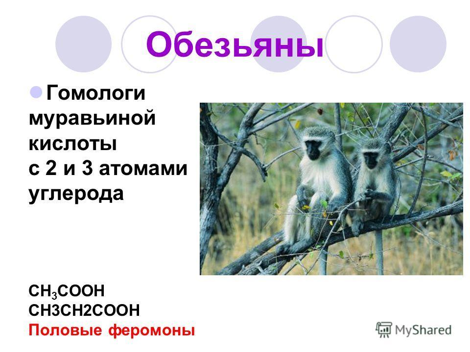 Обезьяны Гомологи муравьиной кислоты с 2 и 3 атомами углерода CH 3 COOH CH3CH2COOH Половые феромоны