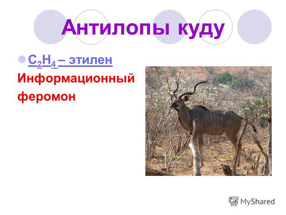 Антилопы куду С 2 H 4 – этилен С 2 H 4 – этилен Информационный феромон