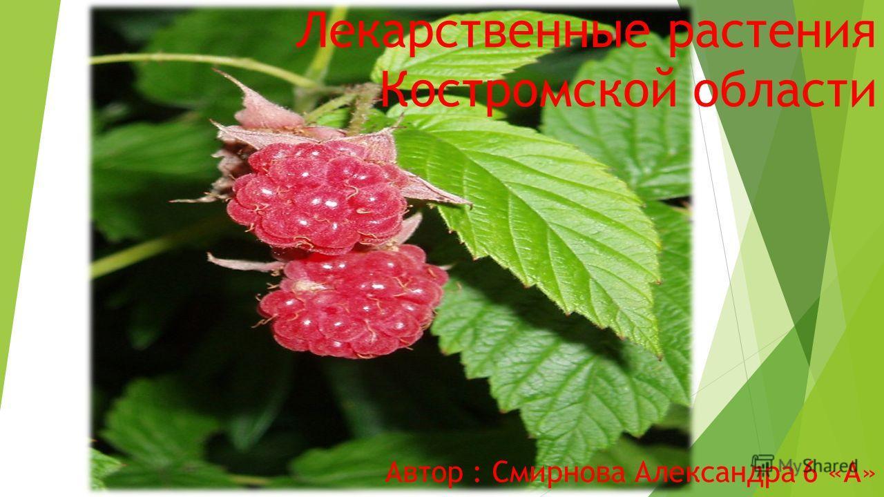 Лекарственные растения Костромской области Автор : Смирнова Александра 6 «А»