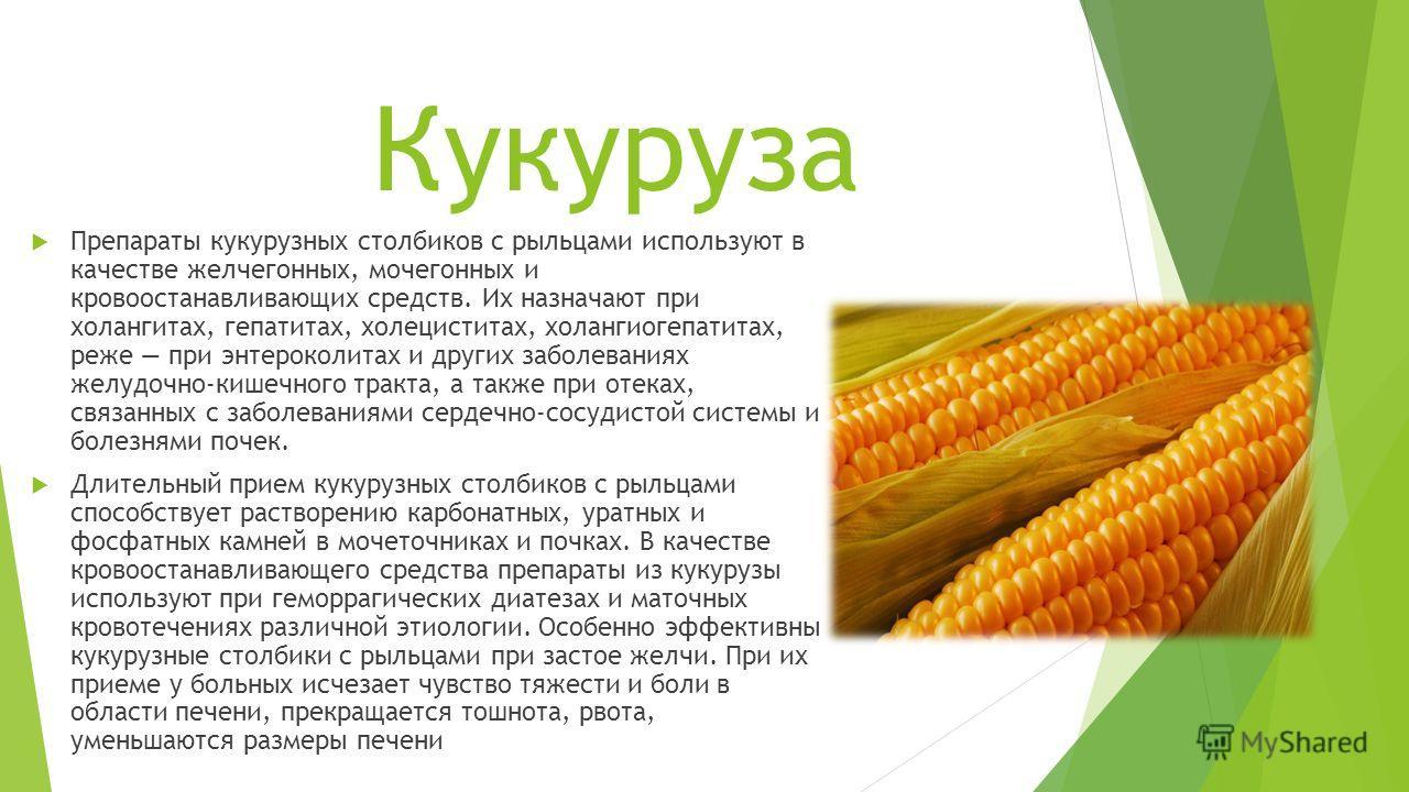 Кукуруза Препараты кукурузных столбиков с рыльцами используют в качестве желчегонных, мочегонных и кровоостанавливающих средств. Их назначают при холангитах, гепатитах, холециститах, холангиогепатитах, реже при энтероколитах и других заболеваниях жел