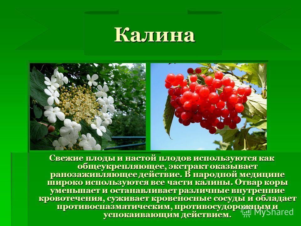 Калина Калина Свежие плоды и настой плодов используются как общеукрепляющее, экстракт оказывает ранозаживляющее действие. В народной медицине широко используются все части калины. Отвар коры уменьшает и останавливает различные внутренние кровотечения