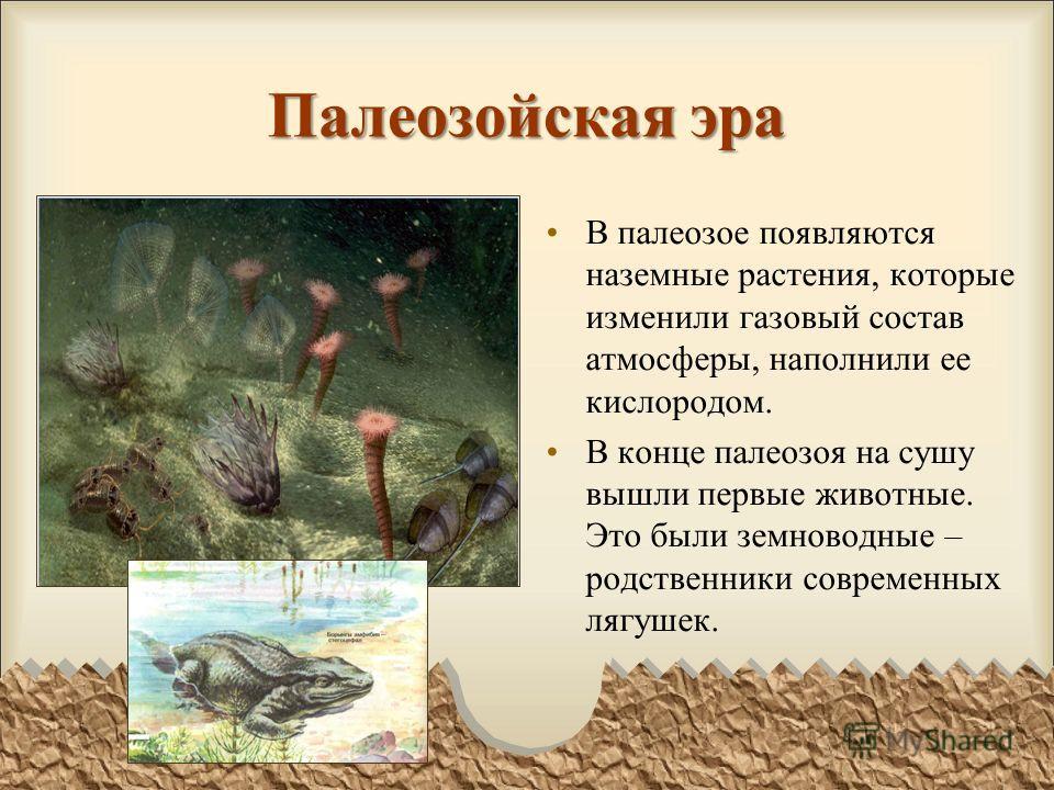 Палеозойская эра В палеозое появляются наземные растения, которые изменили газовый состав атмосферы, наполнили ее кислородом. В конце палеозоя на сушу вышли первые животные. Это были земноводные – родственники современных лягушек.