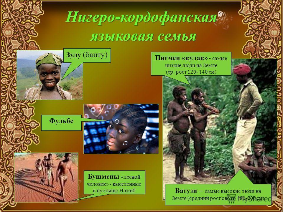 Нигеро - кордофанская языковая семья Зулу (банту) Пигмеи «кулак» - самые низкие люди на Земле (ср. рост 120- 140 см) Ватузи – самые высокие люди на Земле (средний рост около 180-200 см) Бушмены «лесной человек» - выселенные в пустыню Намиб Фульбе