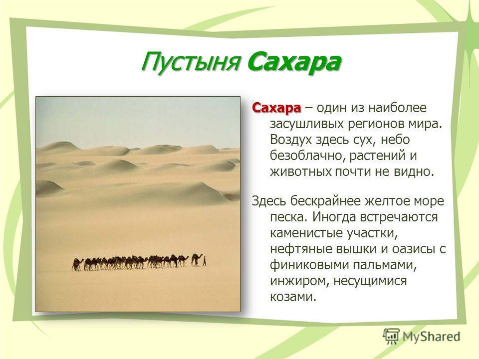 Пустыня Сахара Сахара Сахара – один из наиболее засушливых регионов мира. Воздух здесь сух, небо безоблачно, растений и животных почти не видно. Здесь бескрайнее желтое море песка. Иногда встречаются каменистые участки, нефтяные вышки и оазисы с фини