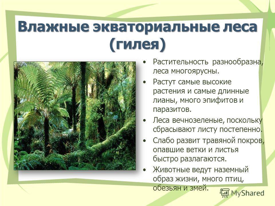 Влажные экваториальные леса (гилея) Растительность разнообразна, леса многоярусны. Растут самые высокие растения и самые длинные лианы, много эпифитов и паразитов. Леса вечнозеленые, поскольку сбрасывают листу постепенно. Слабо развит травяной покров