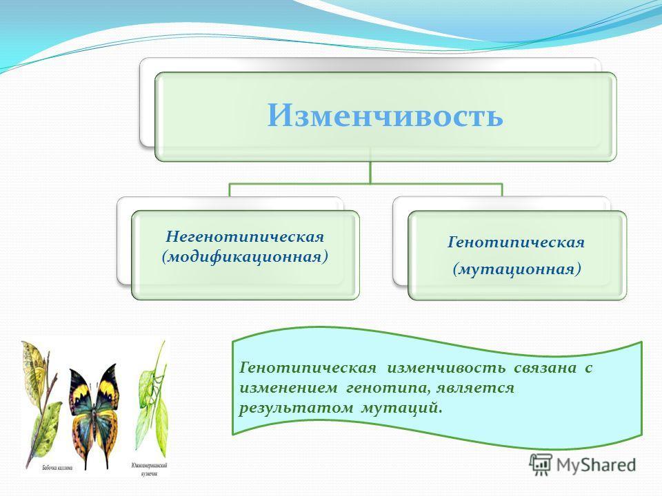 Изменчивость Генотипическая (мутационная) Негенотипическая (модификационная) Генотипическая изменчивость связана с изменением генотипа, является результатом мутаций.