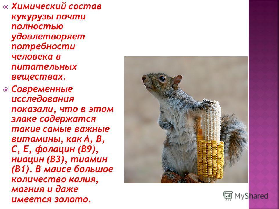 Химический состав кукурузы почти полностью удовлетворяет потребности человека в питательных веществах. Современные исследования показали, что в этом злаке содержатся такие самые важные витамины, как A, B, C, E, фолацин (B9), ниацин (В3), тиамин (В1).