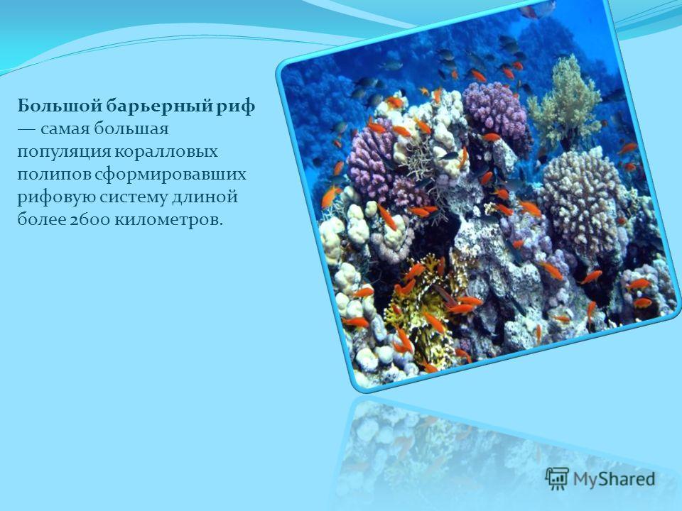 Большой барьерный риф самая большая популяция коралловых полипов сформировавших рифовую систему длиной более 2600 километров.