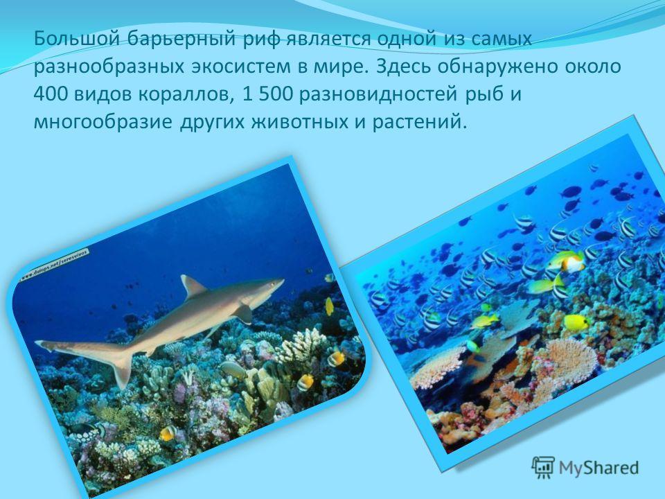 Большой барьерный риф является одной из самых разнообразных экосистем в мире. Здесь обнаружено около 400 видов кораллов, 1 500 разновидностей рыб и многообразие других животных и растений.