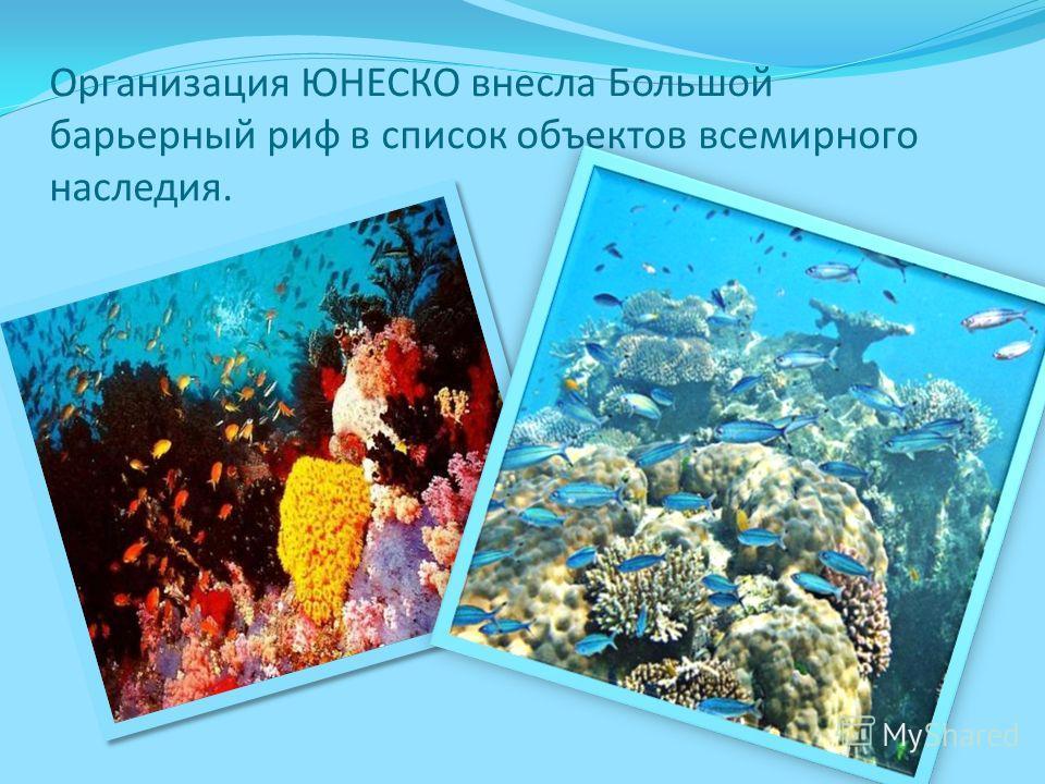 Организация ЮНЕСКО внесла Большой барьерный риф в список объектов всемирного наследия.