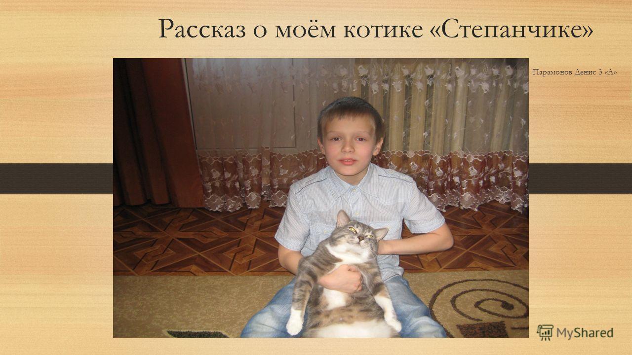 Рассказ о моём котике «Степанчике» Парамонов Денис 3 «А»