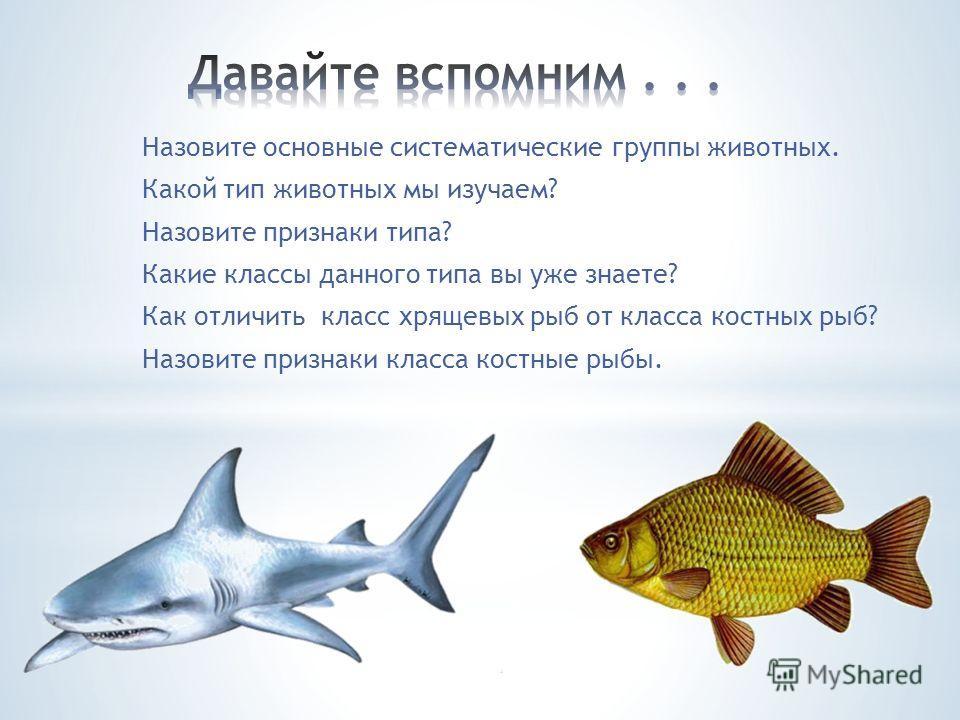 Назовите основные систематические группы животных. Какой тип животных мы изучаем? Назовите признаки типа? Какие классы данного типа вы уже знаете? Как отличить класс хрящевых рыб от класса костных рыб? Назовите признаки класса костные рыбы.