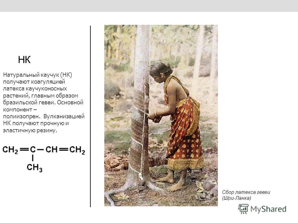 НК Натуральный каучук (НК) получают коагуляцией латекса каучуконосных растений, главным образом бразильской гевеи. Основной компонент – полиизопрен. Вулканизацией НК получают прочную и эластичную резину. Сбор латекса гевеи (Шри-Ланка)