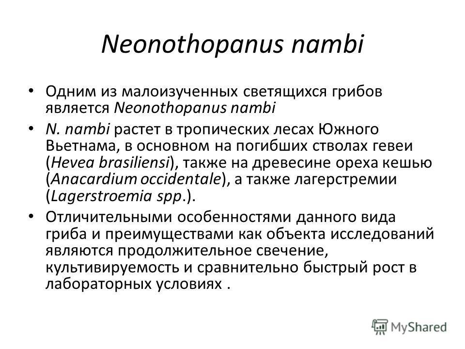 Neonothopanus nambi Одним из малоизученных светящихся грибов является Neonothopanus nambi N. nambi растет в тропических лесах Южного Вьетнама, в основном на погибших стволах гевеи (Hevea brasiliensi), также на древесине ореха кешью (Anacardium occide