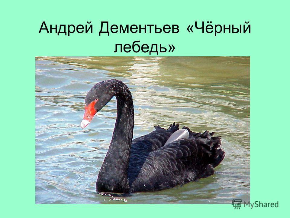 Андрей Дементьев «Чёрный лебедь»