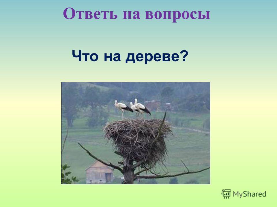 Ответь на вопросы Что на дереве?
