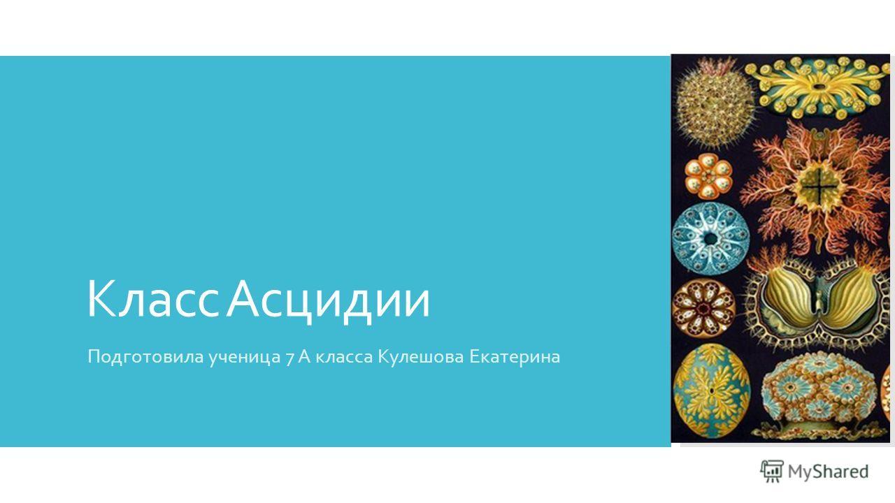 Класс Асцидии Подготовила ученица 7 А класса Кулешова Екатерина