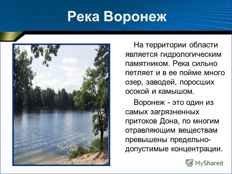 Река Воронеж На территории области является гидрологическим памятником. Река сильно петляет и в ее пойме много озер, заводей, поросших осокой и камышом. Воронеж - это один из самых загрязненных притоков Дона, по многим отравляющим веществам превышены