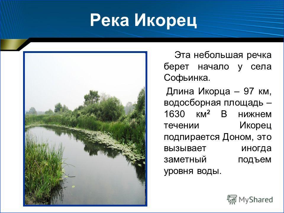 Эта небольшая речка берет начало у села Софьинка. Длина Икорца – 97 км, водосборная площадь – 1630 км 2 В нижнем течении Икорец подпирается Доном, это вызывает иногда заметный подъем уровня воды.