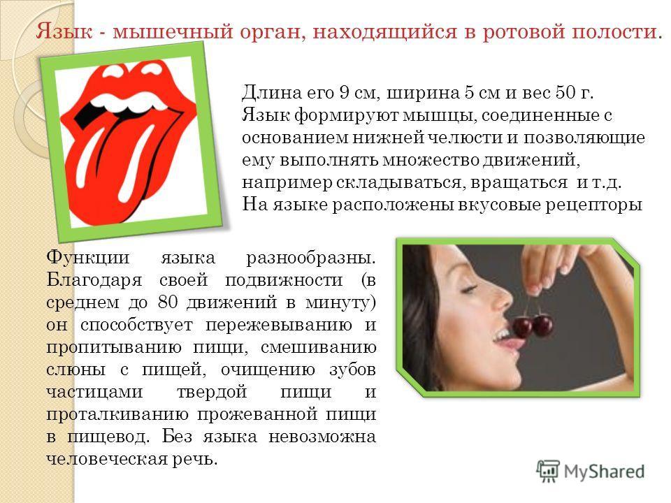 Функции языка разнообразны. Благодаря своей подвижности (в среднем до 80 движений в минуту) он способствует пережевыванию и пропитыванию пищи, смешиванию слюны с пищей, очищению зубов частицами твердой пищи и проталкиванию прожеванной пищи в пищевод.