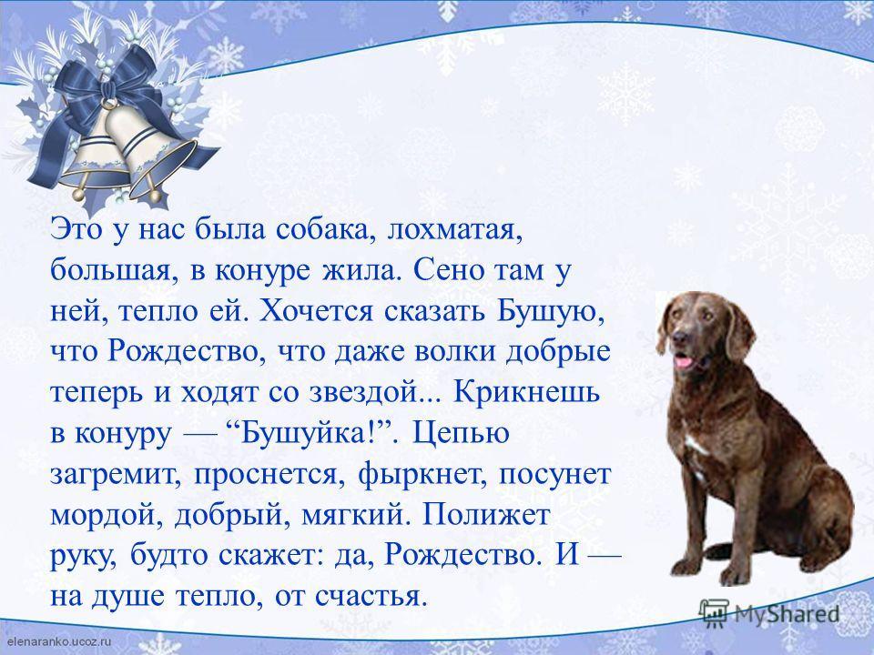 Это у нас была собака, лохматая, большая, в конуре жила. Сено там у ней, тепло ей. Хочется сказать Бушую, что Рождество, что даже волки добрые теперь и ходят со звездой... Крикнешь в конуру Бушуйка!. Цепью загремит, проснется, фыркнет, посунет мордой