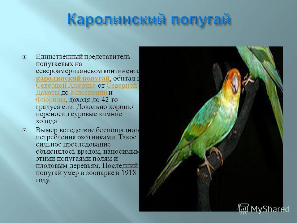Единственный представитель попугаевых на североамериканском континенте, каролинский попугай, обитал в Северной Америке от Северной Дакоты до Миссисипи и Флориды, доходя до 42- го градуса с. ш. Довольно хорошо переносил суровые зимние холода. каролинс
