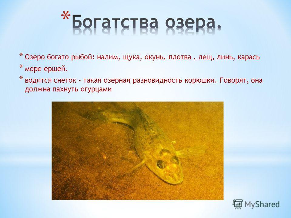 * Озеро богато рыбой: налим, щука, окунь, плотва, лещ, линь, карась * море ершей. * водится снеток - такая озерная разновидность корюшки. Говорят, она должна пахнуть огурцами