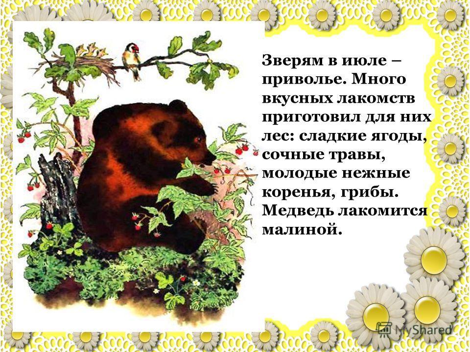Зверям в июле – приволье. Много вкусных лакомств приготовил для них лес: сладкие ягоды, сочные травы, молодые нежные коренья, грибы. Медведь лакомится малиной.