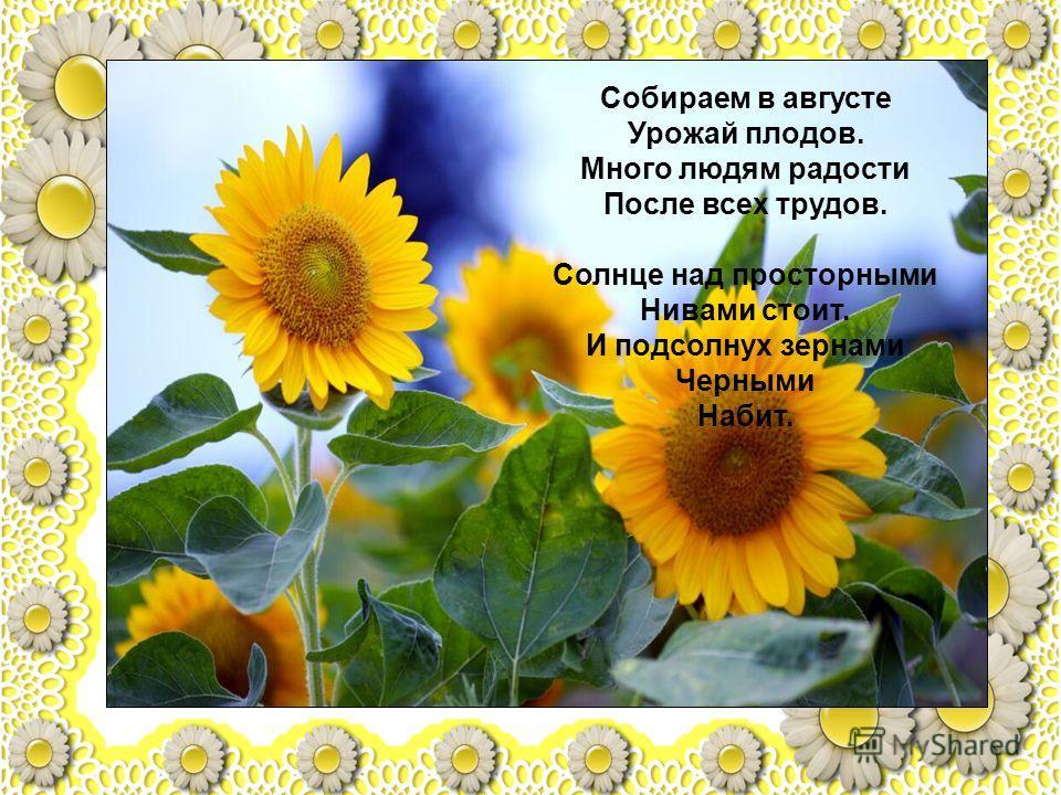 Собираем в августе Урожай плодов. Много людям радости После всех трудов. Солнце над просторными Нивами стоит. И подсолнух зернами Черными Набит.