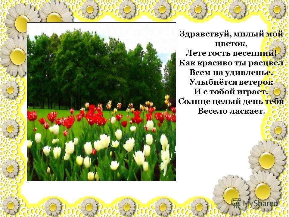 Здравствуй, милый мой цветок, Лете гость весенний! Как красиво ты расцвёл Всем на удивленье. Улыбнётся ветерок И с тобой играет. Солнце целый день тебя Весело ласкает.