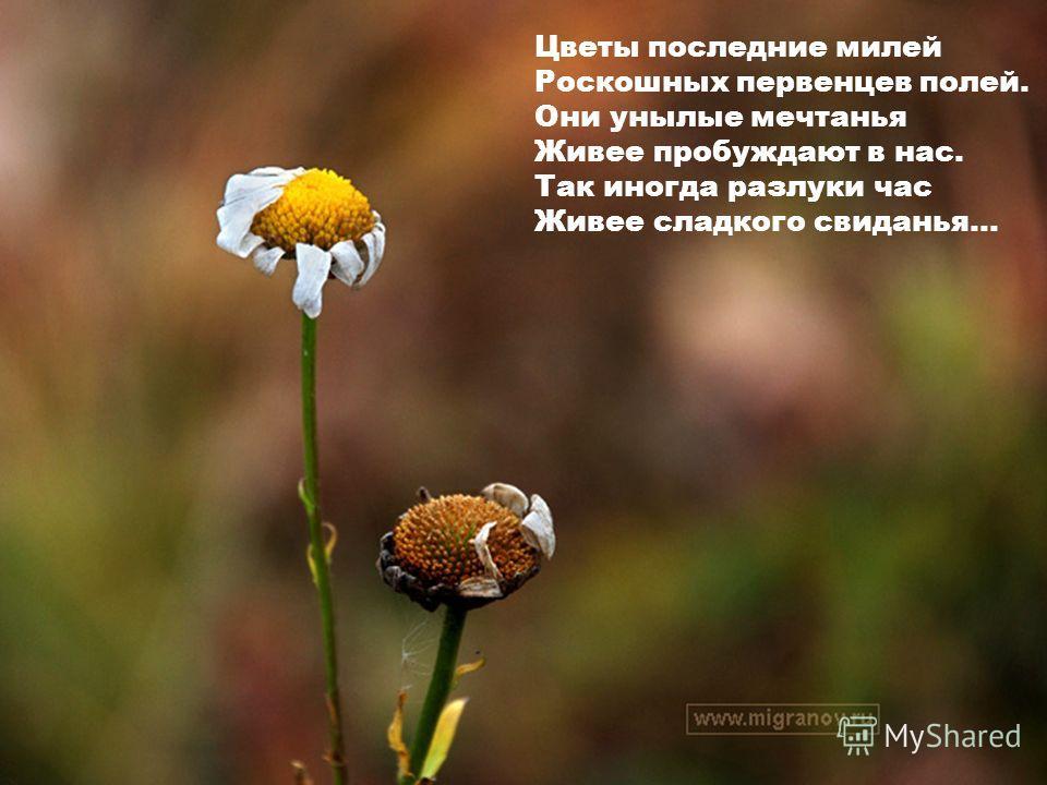 Цветы последние милей Роскошных первенцев полей. Они унылые мечтанья Живее пробуждают в нас. Так иногда разлуки час Живее сладкого свиданья...