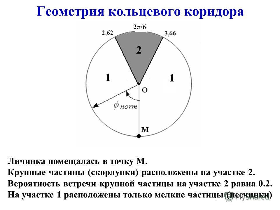 Геометрия кольцевого коридора Личинка помещалась в точку М. Крупные частицы (скорлупки) расположены на участке 2. Вероятность встречи крупной частицы на участке 2 равна 0.2. На участке 1 расположены только мелкие частицы (песчинки) 2π/6
