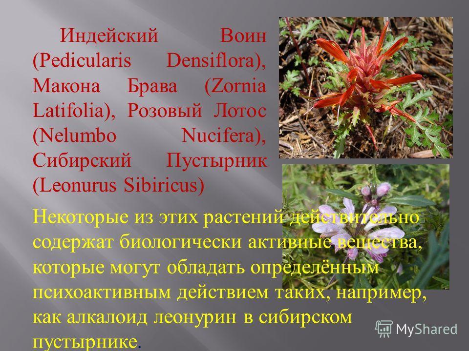 Индейский Воин (Pedicularis Densiflora), Макона Брава (Zornia Latifolia), Розовый Лотос (Nelumbo Nucifera), Сибирский Пустырник (Leonurus Sibiricus) Некоторые из этих растений действительно содержат биологически активные вещества, которые могут облад