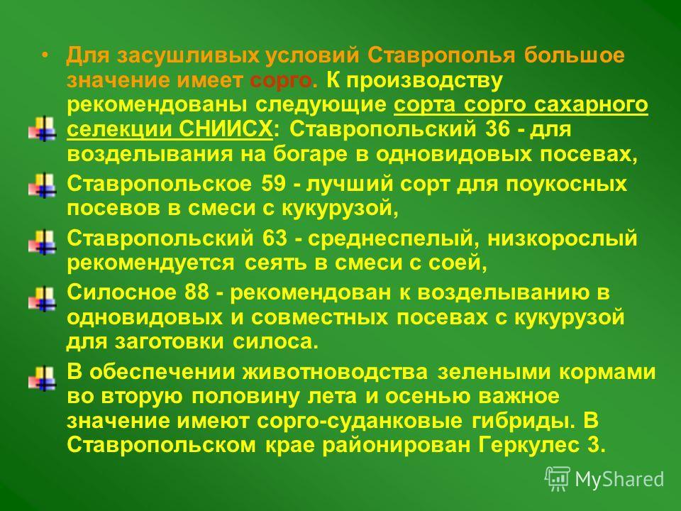 Для засушливых условий Ставрополья большое значение имеет сорго. К производству рекомендованы следующие сорта сорго сахарного селекции СНИИСХ: Ставропольский 36 - для возделывания на богаре в одновидовых посевах, Ставропольское 59 - лучший сорт для п