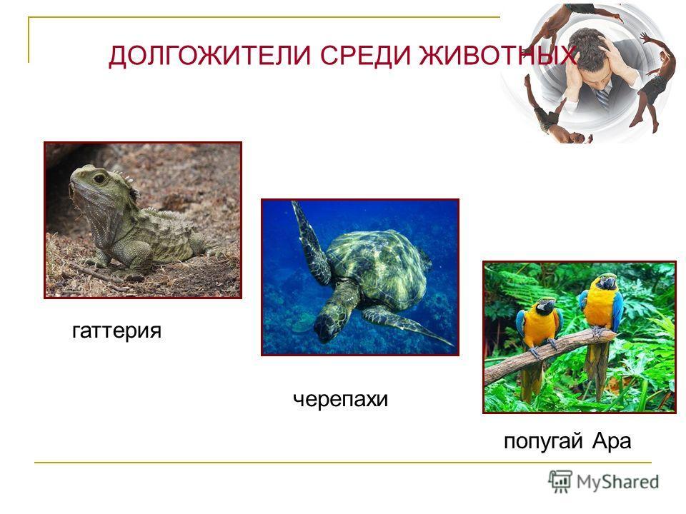 гаттерия черепахи попугай Ара ДОЛГОЖИТЕЛИ СРЕДИ ЖИВОТНЫХ