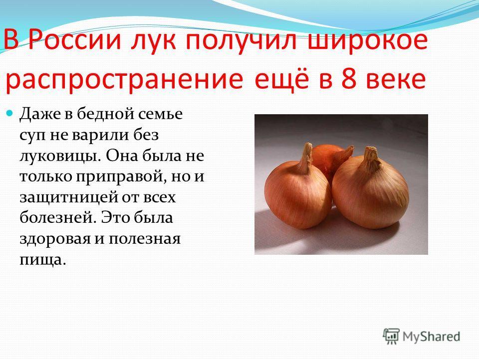 В России лук получил широкое распространение ещё в 8 веке Даже в бедной семье суп не варили без луковицы. Она была не только приправой, но и защитницей от всех болезней. Это была здоровая и полезная пища.