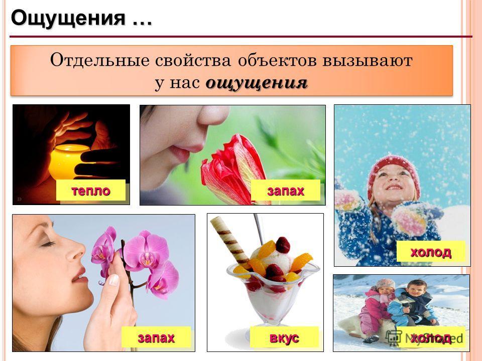 Ощущения … ощущения Отдельные свойства объектов вызывают у нас ощущения теплотеплозапахзапах запахзапахвкусвкусхолодхолод холодхолод