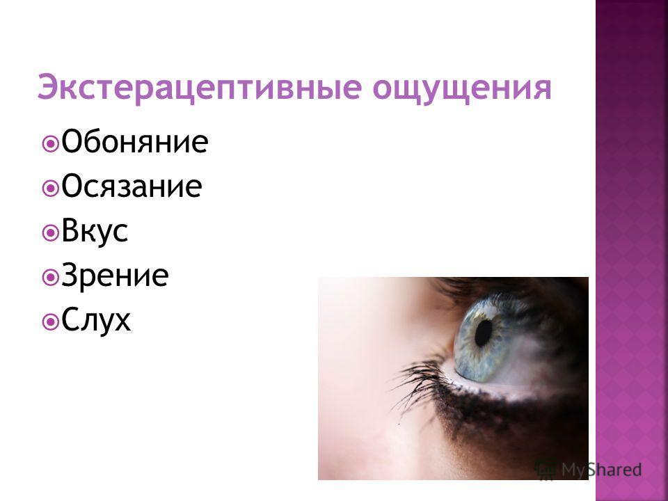 Обоняние Осязание Вкус Зрение Слух