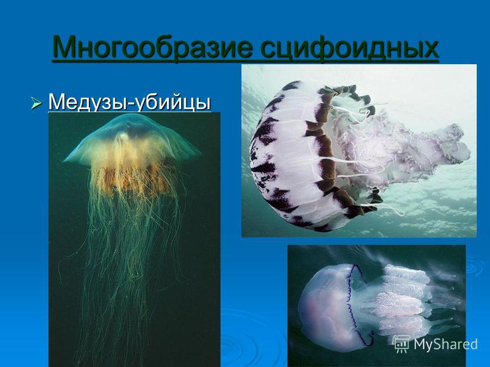 Многообразие сцифоидных Медузы-убийцы Медузы-убийцы