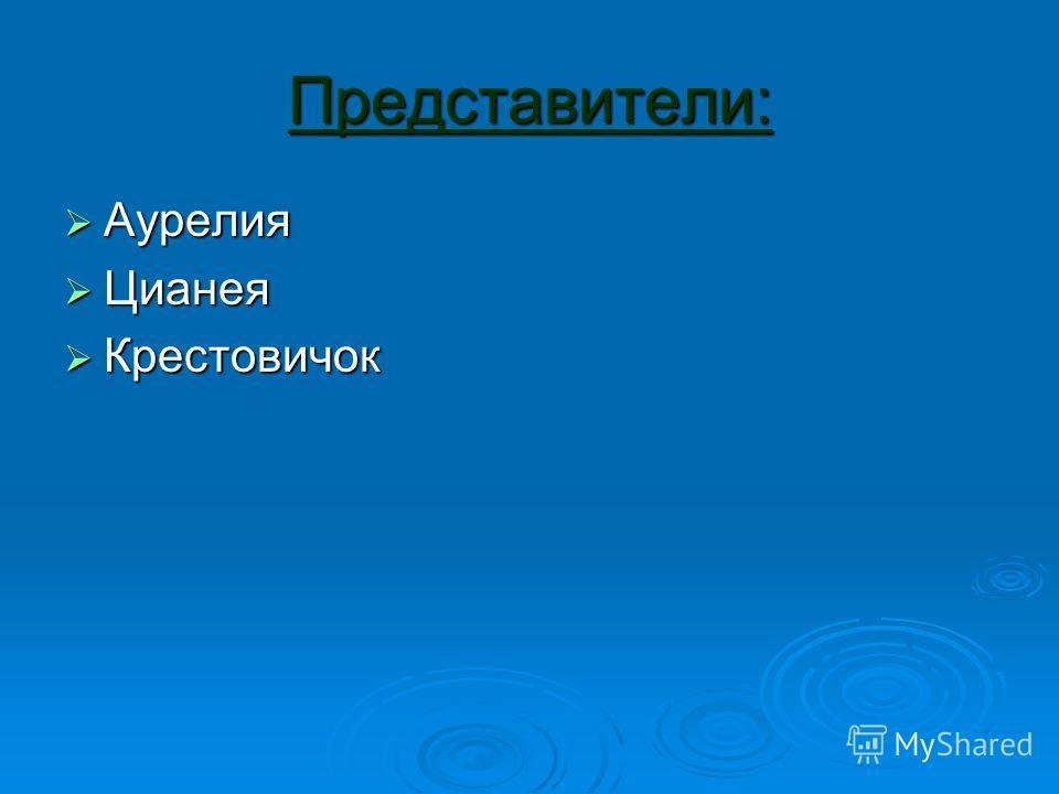 Представители: Аурелия Аурелия Цианея Цианея Крестовичок Крестовичок
