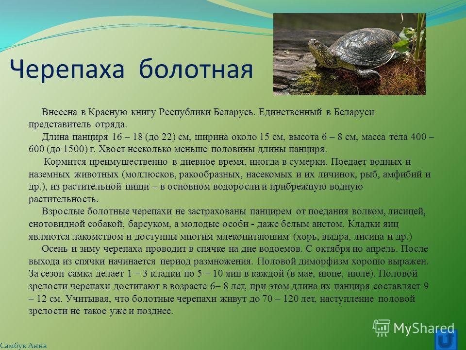 Черепаха болотная Внесена в Красную книгу Республики Беларусь. Единственный в Беларуси представитель отряда. Длина панциря 16 – 18 (до 22) см, ширина около 15 см, высота 6 – 8 см, масса тела 400 – 600 (до 1500) г. Хвост несколько меньше половины длин