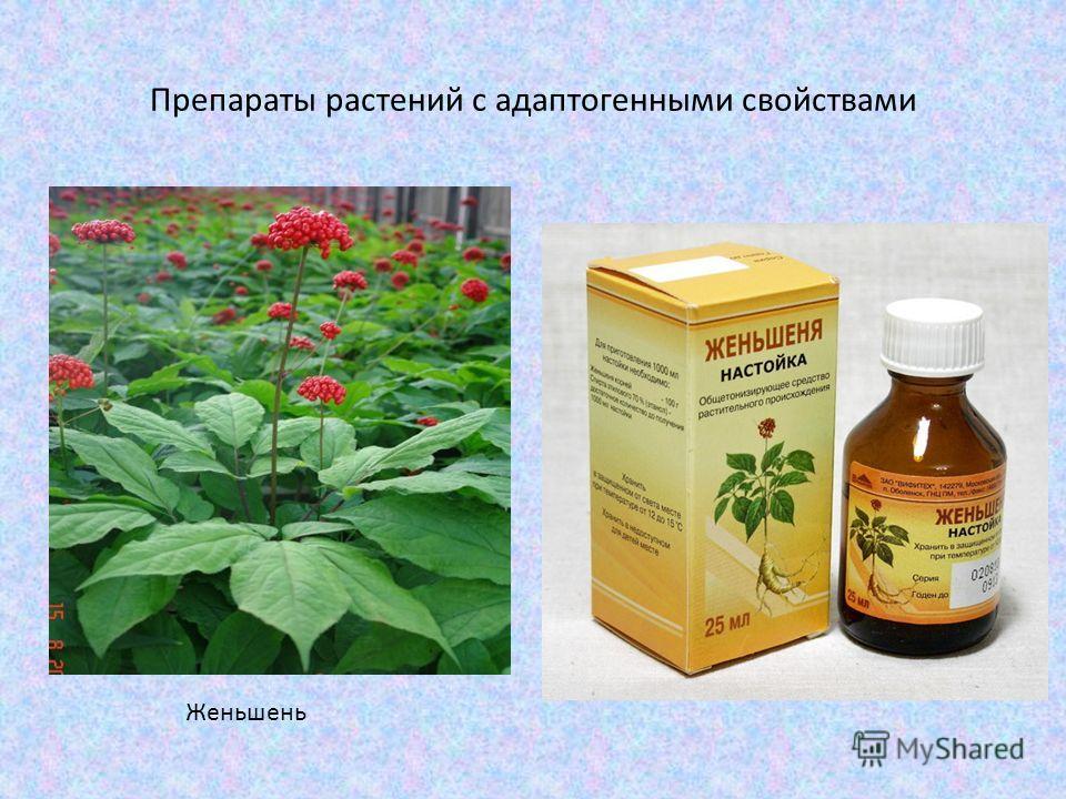 Препараты растений с адаптогенными свойствами Женьшень