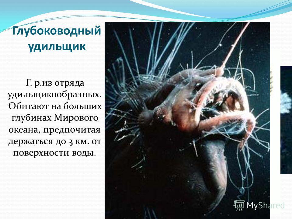 Глубоководный удильщик Г. р.из отряда удильщикообразных. Обитают на больших глубинах Мирового океана, предпочитая держаться до 3 км. от поверхности воды.